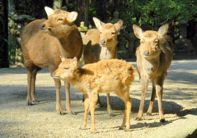 奈良県外出身者が奈良で暮らしてみてマジで驚く10の理由