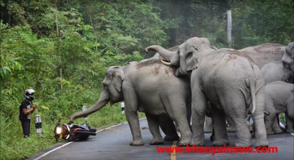 温厚なはずのゾウがバイクを襲撃! 絶体絶命の大ピンチを撮影した映像が信じられないくらい恐ろしい