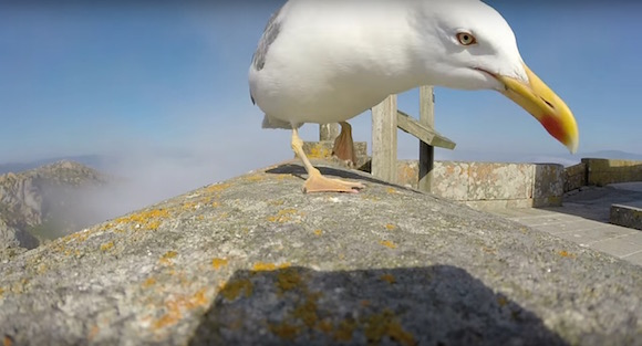 【衝撃動画】鳥がカメラを盗んで飛翔 → どうにか回収 → 驚愕の光景が映っていた!