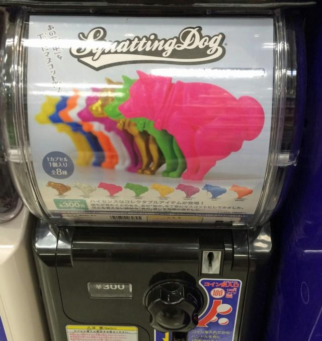 海外でも話題になった「いきむ犬」がガチャで登場! 手のひらの上で踏ん張る姿が猛烈にカワイイ!!