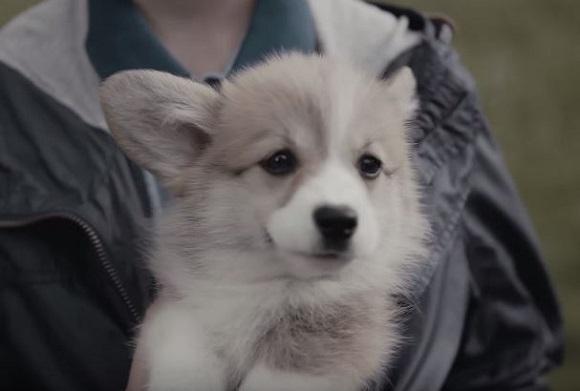 【激萌動画】犬がいれば人はこうなる! ドッグフードブランド「ペディグリーチャム」のCMを見てペットの偉大さを思い知った!!