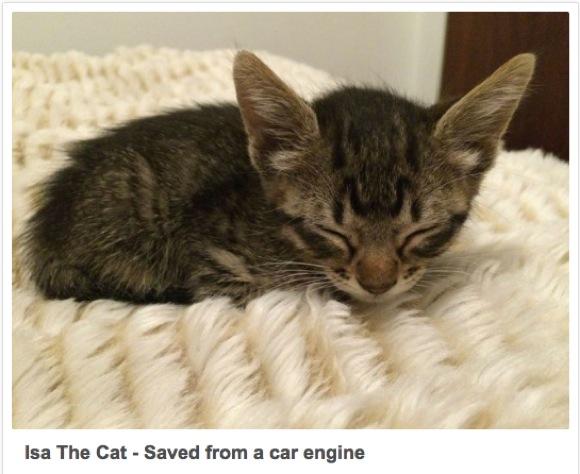 【ネコの命を救え】こんなにいるよ! 車の中から救われたニャンコ画像16選