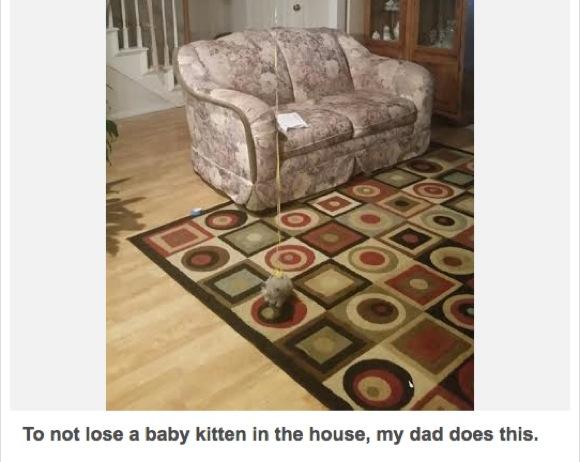 【画像多数】子ネコのちっちゃさに父ちゃんが愕然! でも見失わないように「カワイイ解決方法」を思いついたで!!