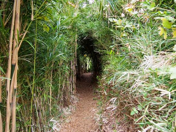 竹林のトンネルをくぐると築50年以上の古民家カフェがあった / 横浜『HUG.CAFE』が一泊したくなるレベルで癒される
