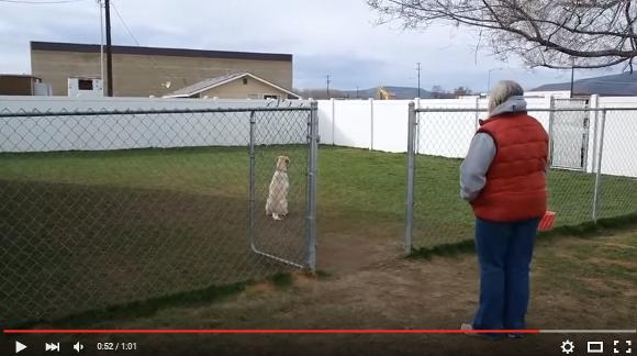 【動画あり】犬にだってプライドがあるワン! 16匹の中で一番最後に名前を呼ばれてイライラしまくる犬