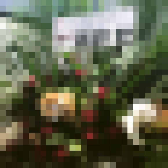 【百獣の王】武井壮さんの「プロフェッショナルすぎる花輪」を見て感心した