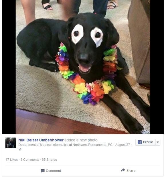 【レジェンドな犬】病気でシャチみたいな顔になった犬の生命力がハンパじゃない件 / 銃で撃たれても汚染水に冒されても無事生還