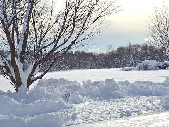 10人中1人しか知らない衝撃事実 / 童謡『雪やこんこ』の「犬は喜び庭駆け回り~」は歌詞の2番だった