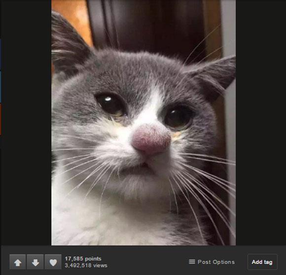 ニャンコ vs 蜂がバトル! どっちが勝ったか丸わかり画像が話題「ネコが気の毒だけどカワイイ」