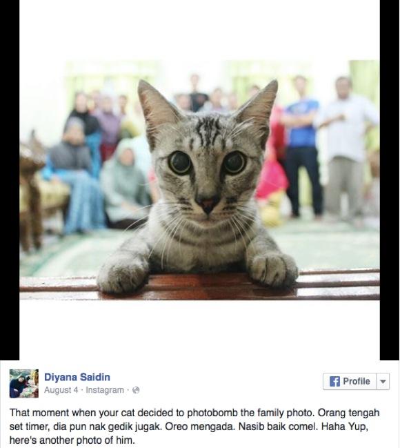 ネコだって家族! でもニャンコが「家族写真」に写り込んだ結果がヒドい!!