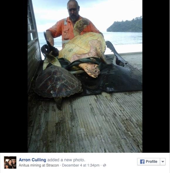 """現代の浦島太郎 !? 男性が """"食材として売られていたカメ"""" をお助け → 海に放流!"""