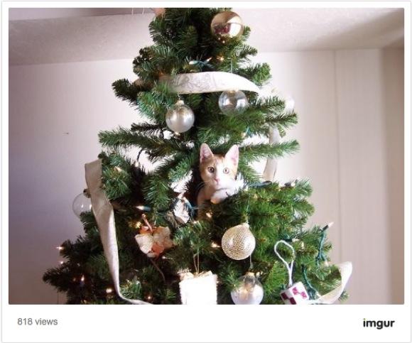 ここまでニャったか! クリスマスツリーが大好きすぎるニャンコ画像25選