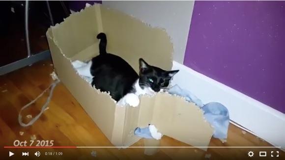 """ものっすごく """"根気強いネコ"""" 現る! 段ボール箱を3カ月でバラバラに破壊したネコの動画がすげーニャー!!"""