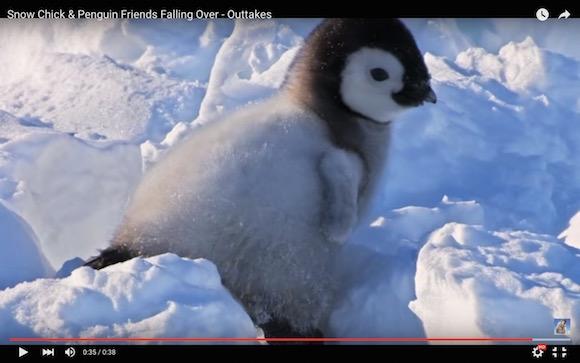 【キュン死待ったなし】ペンギンの日常がありのままで世界一かわいい