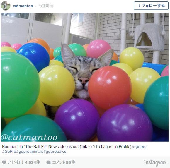 【動画】ニャンコ + プールいっぱいのボール =猫と人間に幸せが訪れる!!