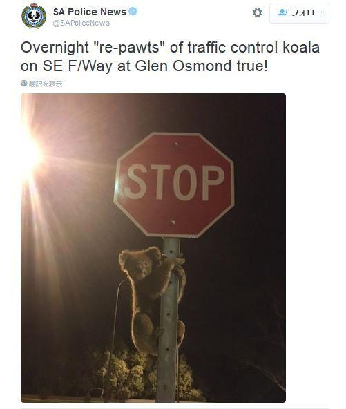 ちゃんと一時停止してね~! 意外な場所に出没して「車に止まって」とアピールしているようなコアラが超絶キュートな件