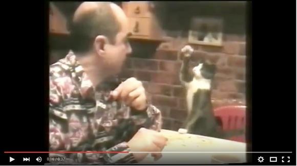 """【動画】""""耳が不自由な飼い主さん"""" に手話で「ゴハンちょうだい」と伝えるニャンコ! 手を動かしてちゃ~んとお話しているのだ!!"""