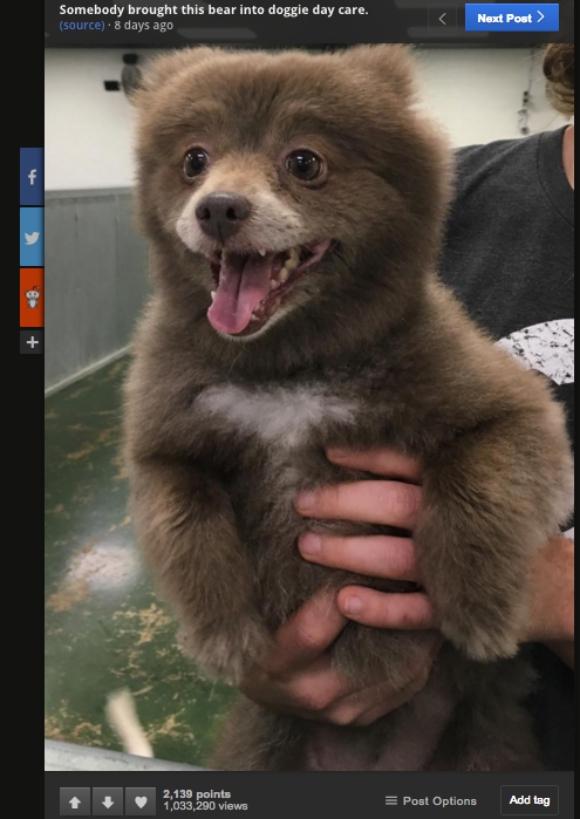 【論争】これは犬? それとも熊? 意見が割れた一枚の写真