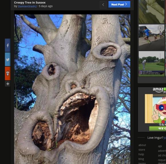 「心の闇が深そうな木ランキング1位」はこの木!