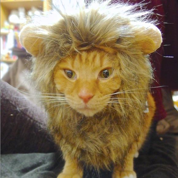 【正直レビュー】Amazonで90%OFFだったから「ライオンのたてがみ」を買ってみた / そして飼いネコにかぶってもらった