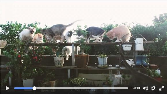 """日産の """"猫バンバン"""" 応援動画が素晴らしい出来と話題! ネットの声「CMにすべき」「やっちゃえNissan」"""