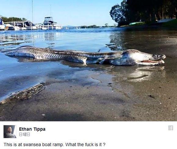 オーストラリアの海岸に謎の怪生物が打ち上げられる! 「イルカとウナギが合体したような」奇怪な姿が話題に