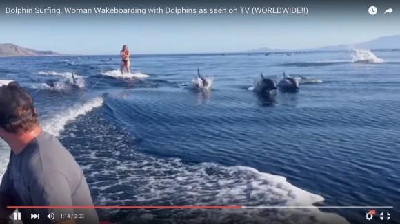 【1530万回再生】まるでイルカの波! 見ているだけでハッピーになる奇跡の映像が話題