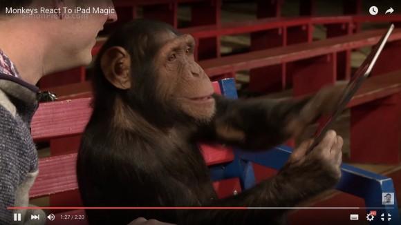 【動画】見ているだけで癒される!「iPadを使った手品」に騙される無邪気なチンパンジーが最高にカワイイ