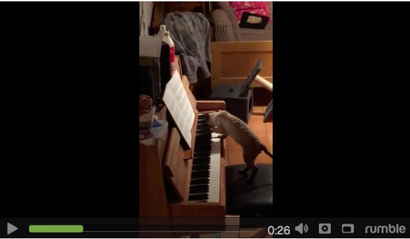 【衝撃映像】Q:猫は人のいないところでは何をしているのか?→ A:ピアノ弾いてるんだにゃん