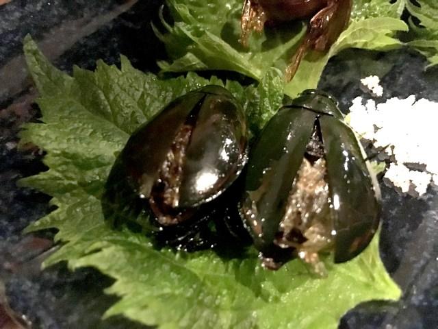 """【閲覧注意】生まれて初めて """"昆虫"""" を食べてみた結果 → ゲンゴロウの味が忘れられない"""