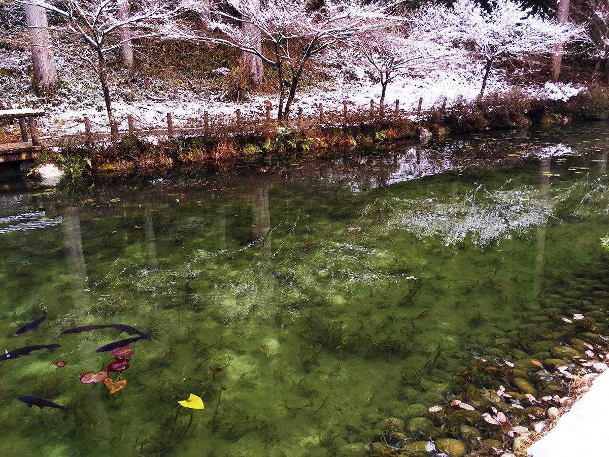 Monet Pond10