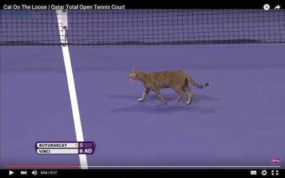 【動画あり】テニスの試合にネコが乱入 → 忍者のような動きに観客は大喜び