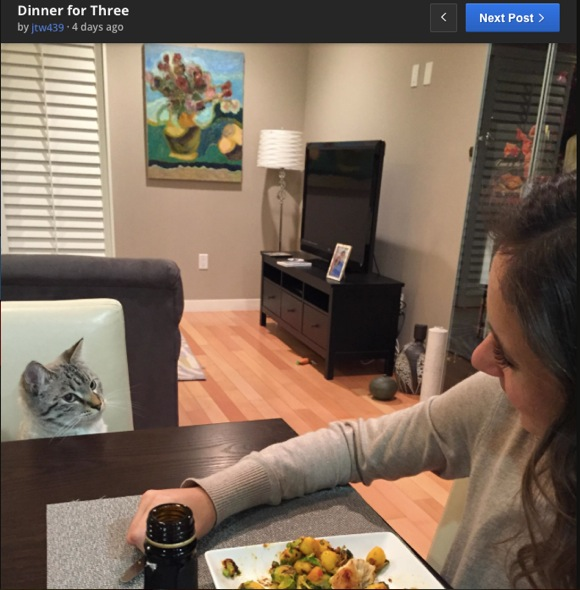 なぜか人間の食事をジーーーーッと見つめてくるニャンコ & それを1年間撮影し続けた家族