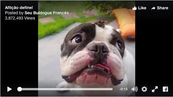ど、どうしよう! 頭の上のカエルに困惑するワンコ動画が可愛すぎる〜!!