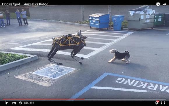 【衝撃格闘動画】不気味でキモチ悪いロボット犬 vs 普通の犬