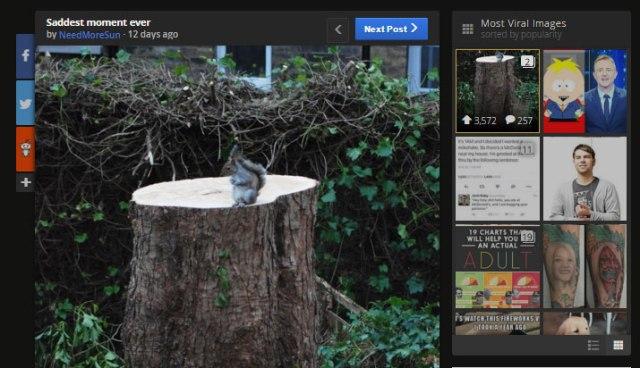 【切ない画像】自分が住んでいた木が切り倒されて超寂しそうなリスが激写される