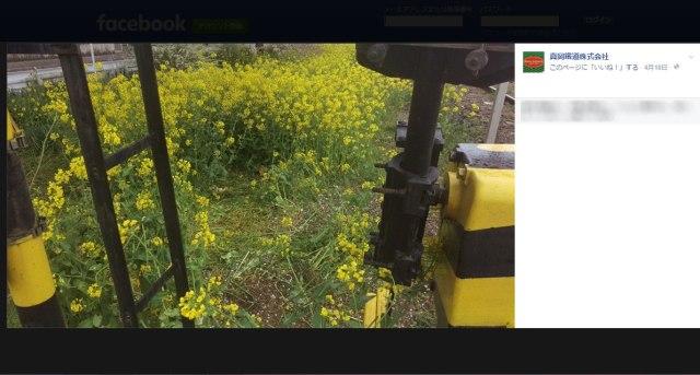 【これは酷い】真岡鉄道がマナーの悪い撮り鉄に「もう来ないで」と警告! 沿線の花畑が無残な姿に / ネットの声「ここまでして撮りたいものって何?」