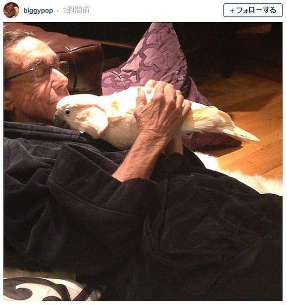 【ほのぼの画像】パンクロック界の帝王イギー・ポップのペットがSNSで人気者に! ペットと戯れるイギーの姿が愛らしすぎる件