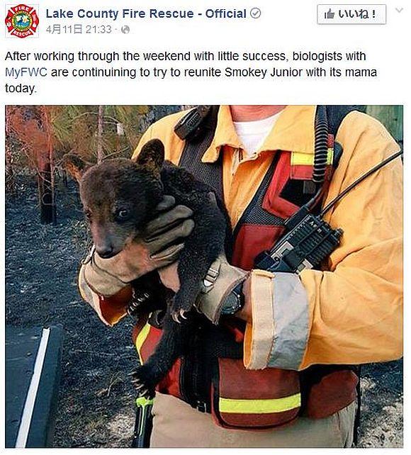 """山火事から救出された子熊がテディベアみたいでカワいすぎるぞ! """"火"""" にちなんで名付けられた名前が粋!!"""