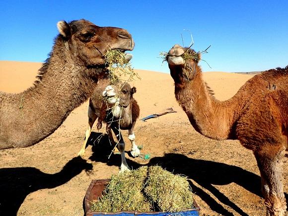 【灼熱】サハラ砂漠あるある40