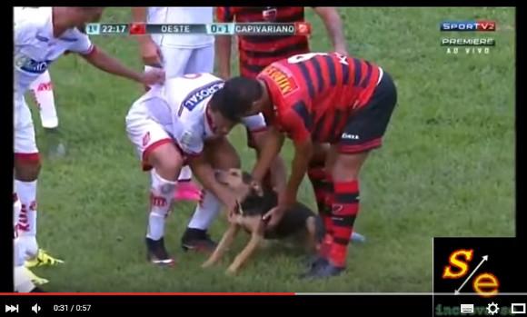 大事なサッカーの試合中に迷い犬が乱入! その時選手たちが取った行動とは? 屈強な男たちのギャップにウットリ