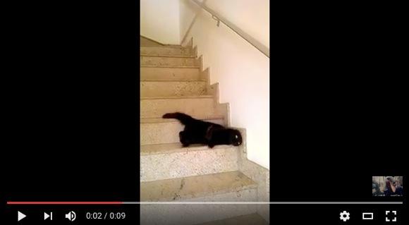 スゴいっす、ニャンコ先輩! ナメクジのように階段を下りるネコが激撮される!!