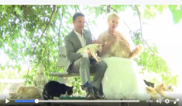 """ネコ好きの夢ニャ! あるカップルが """"1100匹の保護ネコ"""" の前で結婚式を挙げる"""
