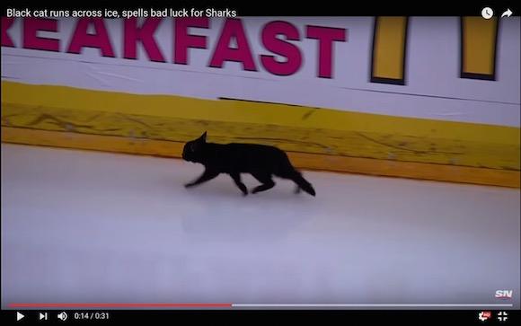 【動画あり】ホッケーの試合にニャンコが乱入 → 氷の上で華麗なフットワークを見せる