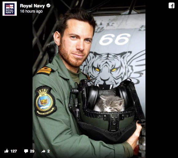 子ネコを保護した英国海軍の大尉がイケメンすぎるとネット民ざわつく「卵巣が爆発してヤバい」