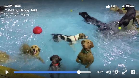 """【動画】プールで1匹だけ """"別次元に達しちゃった"""" ワンコが激撮される! どの子かすぐに分かる?"""