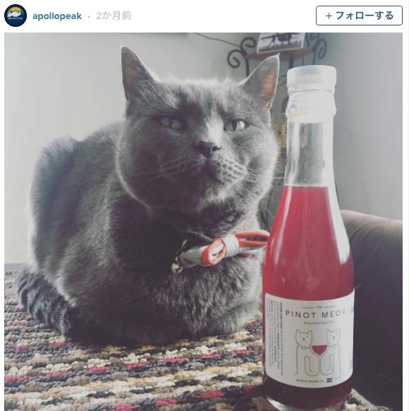 「ネコ用ワイン」が誕生! 美味しい&安全だからネコ様との晩酌も夢じゃにゃーよ!!