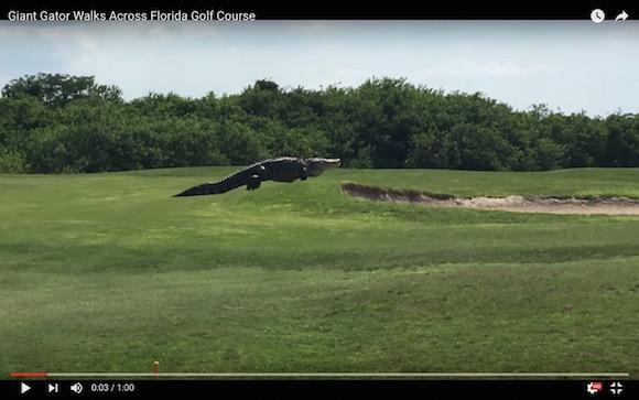 【衝撃映像】まるで恐竜! 超巨大サイズのワニがゴルフ場に出現して世界が騒然