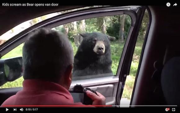 【衝撃動画】恐怖! クマが車のドアを開ける事件が海外のサファリパークで発生!!