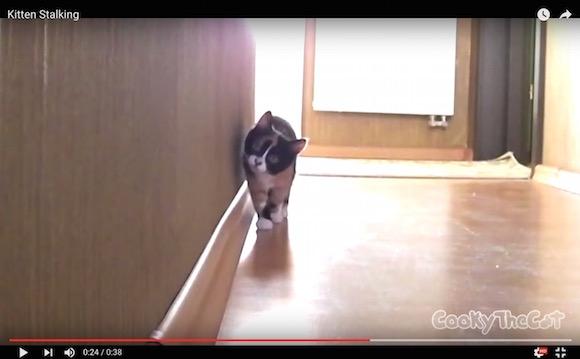 【ホラー映像】貞子のように画面へ迫ってくる猫